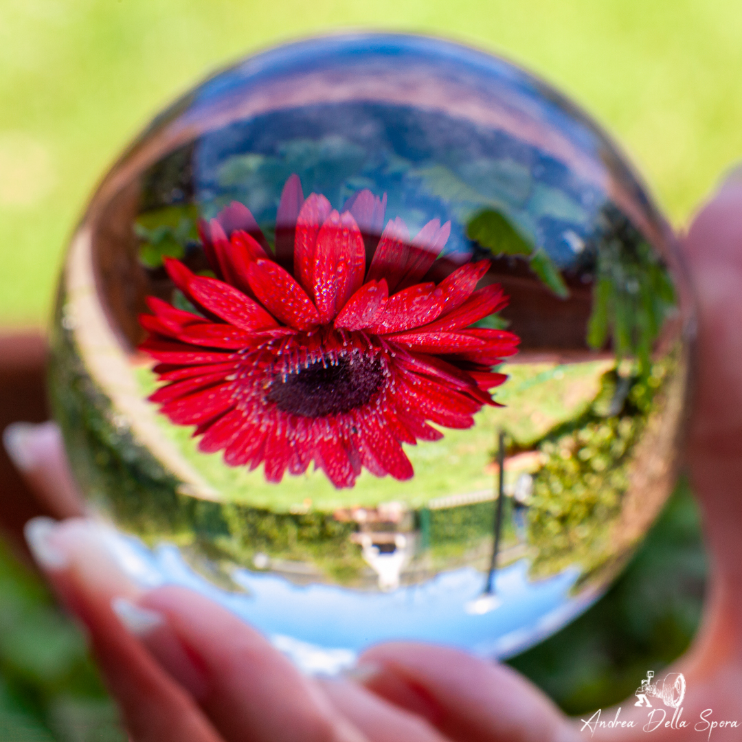 LENSBALL-GERBERA-NATURE