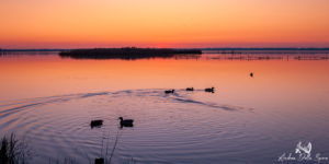 tramonto-toscana-massaciuccoli