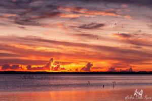 oasi lipu massaciuccolI tramonto