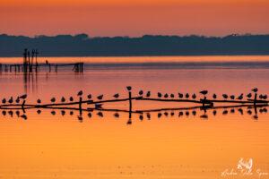 oasi lipu massaciuccoli - tramonto