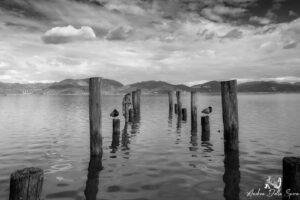 torre del lago puccini - lago di massaciuccoli