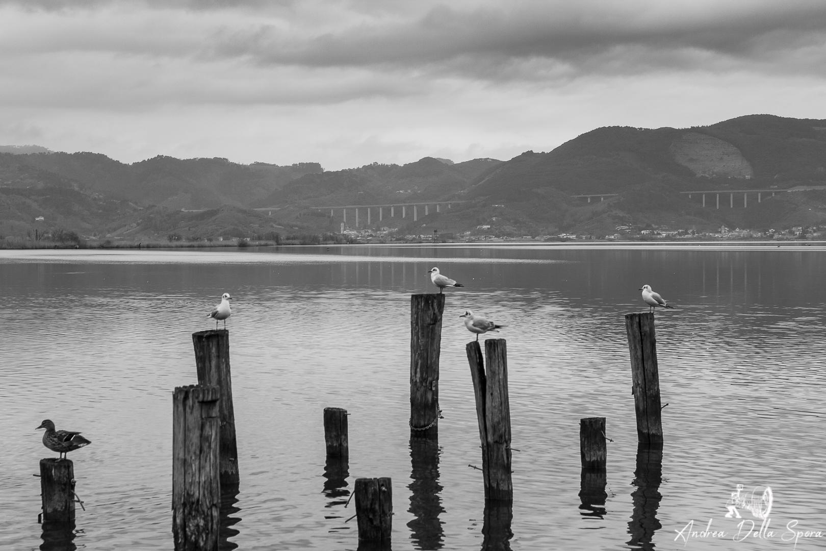 Torre del lago Puccini-Lago di Massaciuccoli-Viareggio